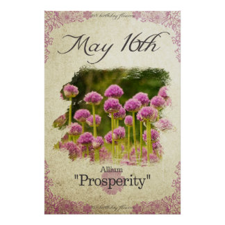 "Birthday flowers on May 16th ""Allium"" Poster"