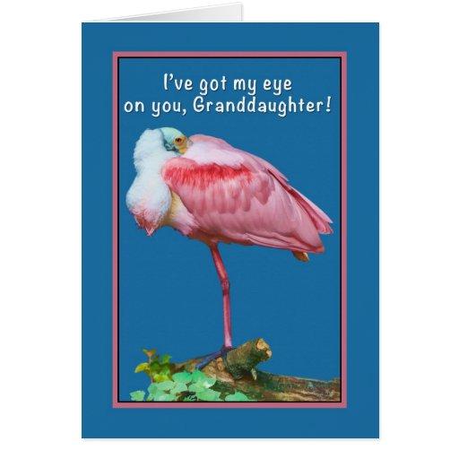 Birthday, Granddaughter, Peekaboo Spoonbill Card