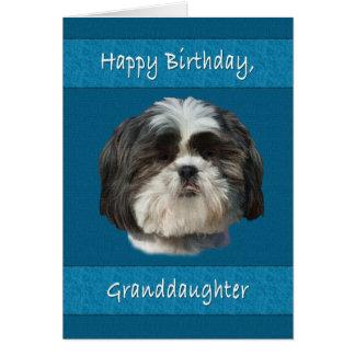 Birthday, Granddaughter , Shih Tzu Dog Card