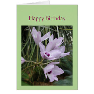 Birthday Greetings with a beautiful Orchid Card
