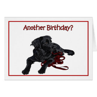Birthday Humor Black Labrador Retriever Card