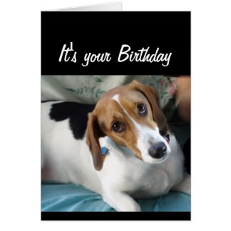 Birthday Humour Don't Eat All that Cake Cute Dog Card