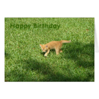 Birthday Kitten Greeting Card