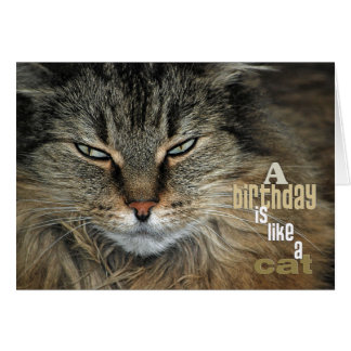 Birthday Maine Coon Cat humor Card