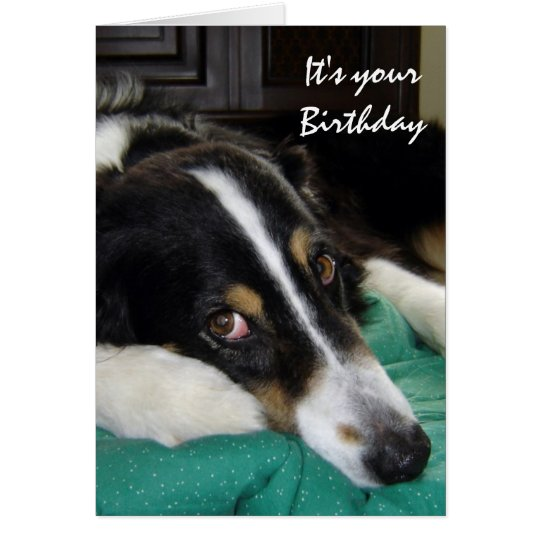Birthday Old Age Humour Border Collie Dog Pet Card