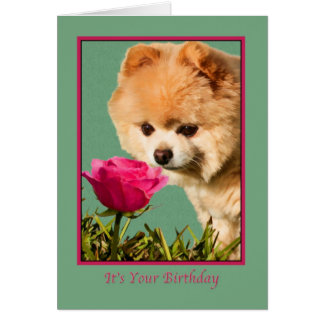 Birthday, Pomeranian Dog and Rose Card