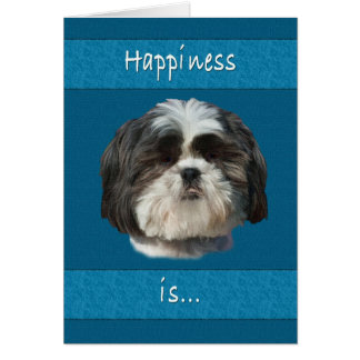 Birthday, Shih Tzu Dog Card