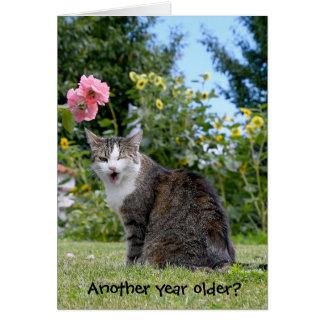 birthday tabby cat card