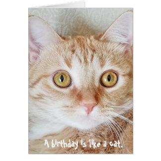 birthday tabby cat humor card
