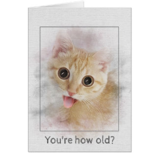 Birthday tabby kitten card