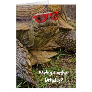Birthday tortoise in sunglasses card