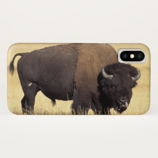 bison, Bison bison, bull in Yellowstone National iPhone X Case