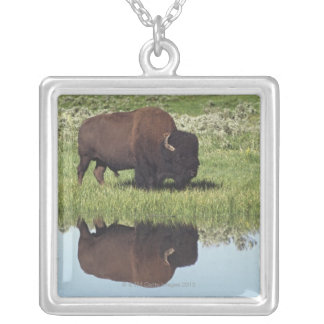 Bison (Bison Bison) On Grassy Meadow Silver Plated Necklace