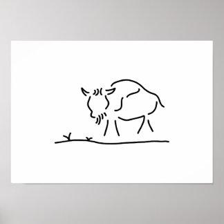 bison buffalo America