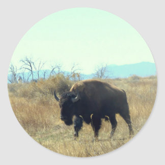 Bison Buffalo Bull Sticker