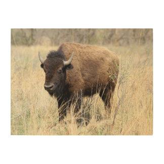 Bison Cow in Flint Hills, Kansas Wood Canvases