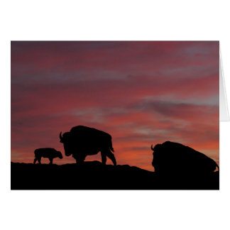 Bison family card