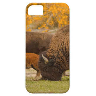 Bison Family Nation iPhone 5 Covers