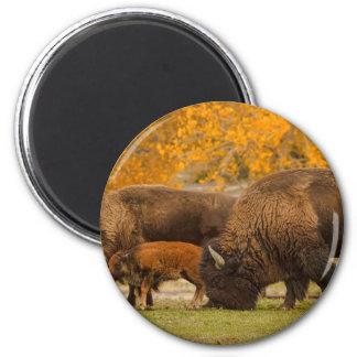 Bison Family Nation Magnet
