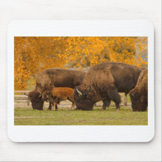 Bison Family Nation Mouse Pad