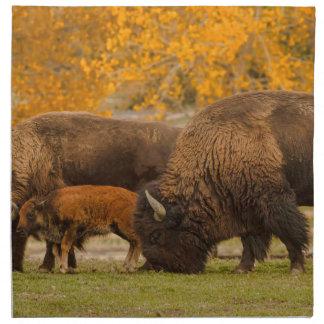 Bison Family Nation Napkin