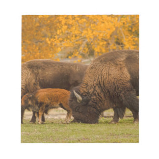 Bison Family Nation Notepad