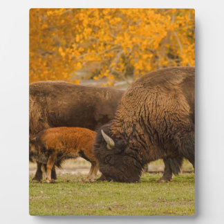 Bison Family Nation Plaque