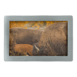 Bison Family Nation Rectangular Belt Buckles
