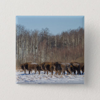 Bison Herd 15 Cm Square Badge