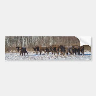 Bison Herd Bumper Sticker