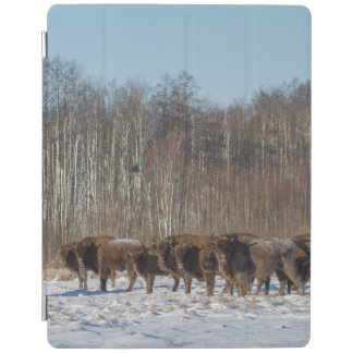 Bison Herd iPad Cover