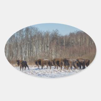 Bison Herd Oval Sticker