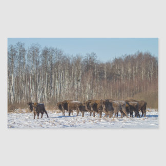Bison Herd Rectangular Sticker