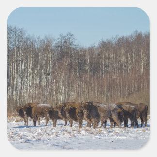 Bison Herd Square Sticker