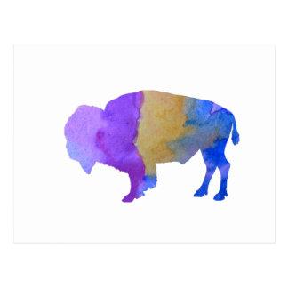 Bison Postcard