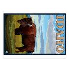 Bison Scene - Idaho Postcard