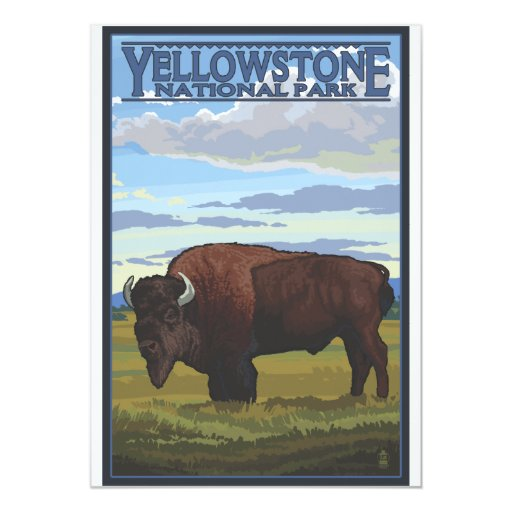 Bison Scene - Yellowstone National Park 13 Cm X 18 Cm Invitation Card