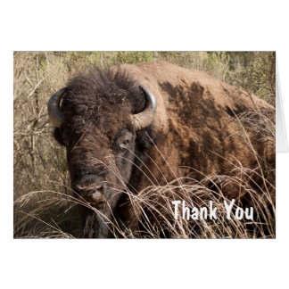Bison thank you card