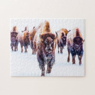 Bison Yellowstone Wyoming. Jigsaw Puzzle