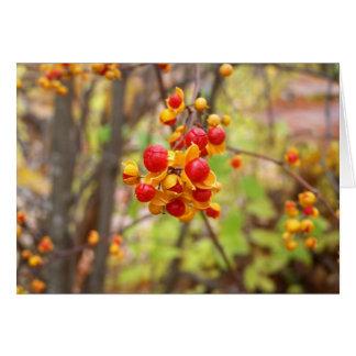 Bittersweet Berries Card