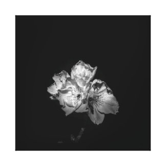 Black an white blossom canvas. canvas print