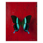 Black and blue butterfly on red wall