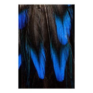 Black And Blue Feather Abstract Poster