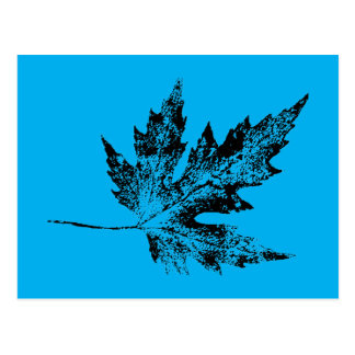 """Black and Blue Maple"" Country Roads Postcard"