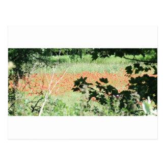 Black And Blurred Postcard