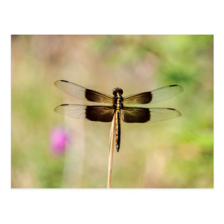 Black and Gold Dragonfly Postcard