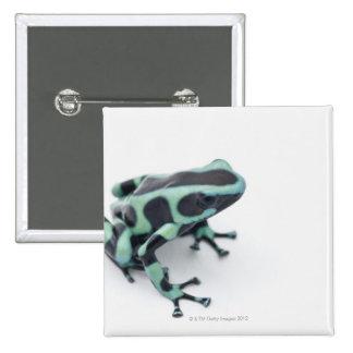 black and green poison dart frog (dendrobates 15 cm square badge