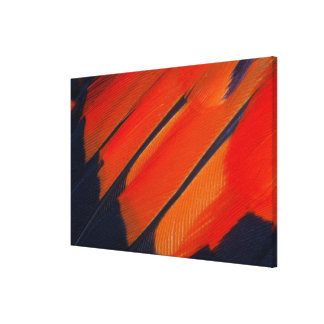 Black And Orange Feather Abstract Canvas Print