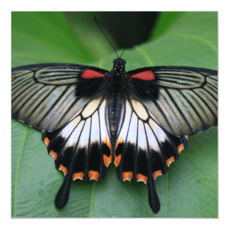 """Black and Pink Swallowtail Butterfly Invitations 5.25"""" Square Invitation Card"""