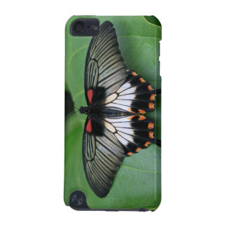 Black and Pink Swallowtail Butterfly iTouch Case iPod Touch (5th Generation) Cover